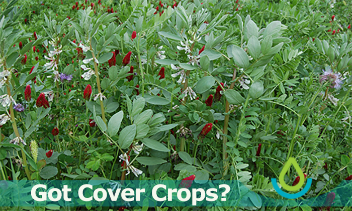 Banner image of Got Cover Crops? feature