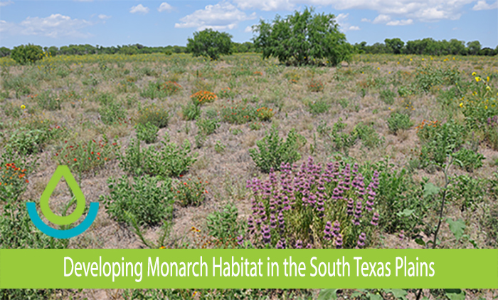 Developing Monarch Habitat in the South Texas Plains