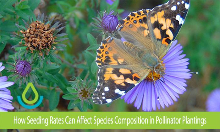 Pollinator Seeding Rates Banner