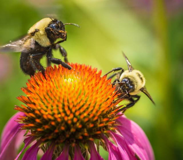 05072019_PollinatorBlog_GovD2_v2