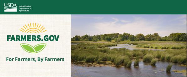 Wetlands Month Blog