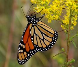 CIGSpringNewsletter_PollinatorPhoto