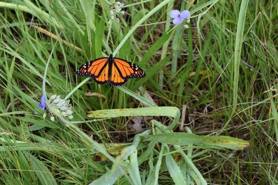Orange butterfly perching on a blade of grass