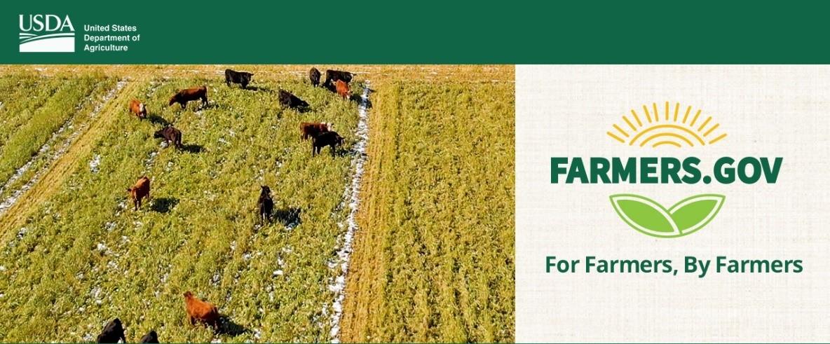 Grazing cover crops Minnesota