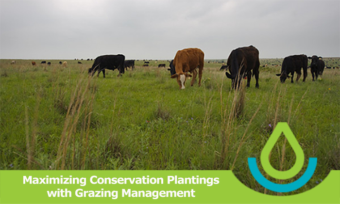 Maximizing Conservation Plantings with Grazing Management