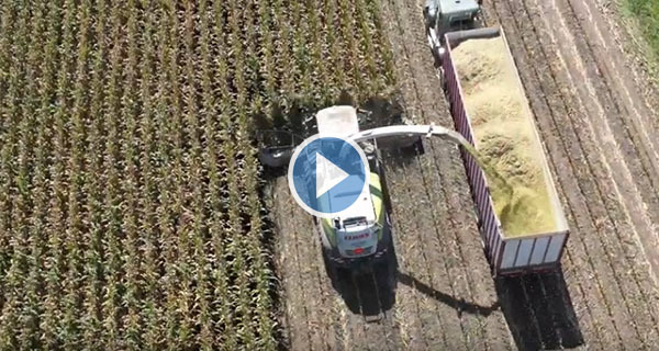Cover Crop Video 1