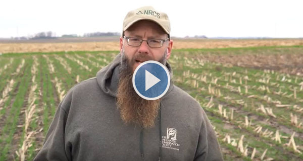 Cover Crop Video 3