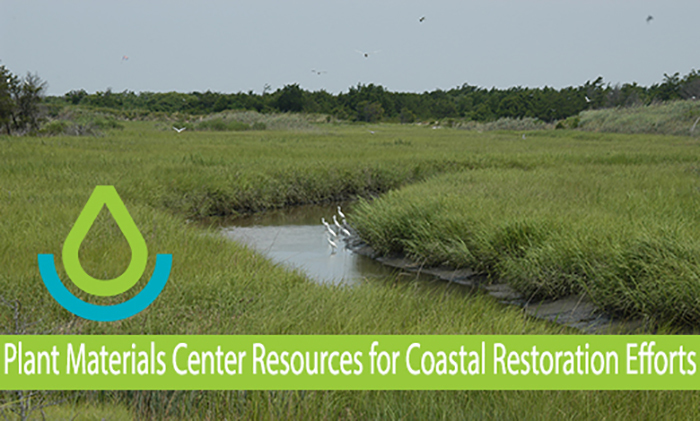 Tidal wetlands provide flood protection, wildlife habitat and water quality improvement.