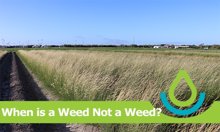 When is a Weed Not a Weed?