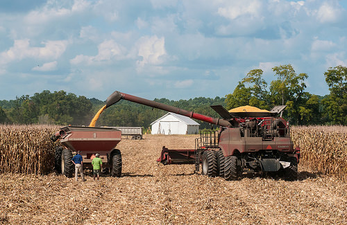 Virginia farmers harvest their corn.