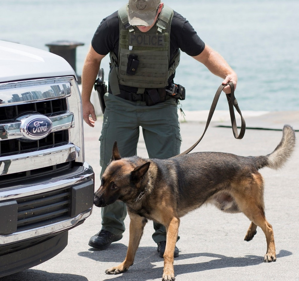 An explosive detection canine team working in an operational search scenario at a DHS S&T REDDI event in Miami, Florida.