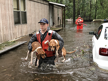 Shallow-water response team rescues dogs