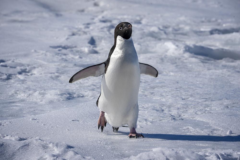 Coast Guard Cutter Polar Star arrives in Antarctica