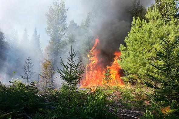 Arson Wildfire