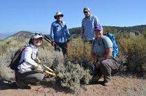 Thining juniper seedlings in Bi-State sage grouse habitat. Photo by USFWS.