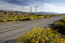 Transmission lines near wildflowers