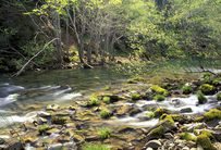 Eel WIld and scenic river in a forest. green lush vegetation with water rolling over rocks