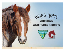 BLM Wild horse and burro
