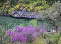 North Fork River. Clear waters with purple vegetation