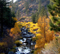 yellow foliage near low trickling stream