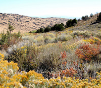 high desert fall foliage in valley