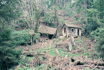 historic timber operation houses broken down on side of hill