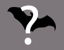 mystery flying mammal