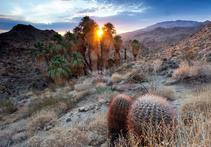 coachella valley palm oases during sunset