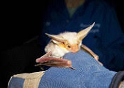 large_bats held in a gloved hand