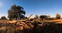 Sunset hits the lowland oak savanna that was once a WWII-era military training ground. Photo by Matt Christenson, BLM.