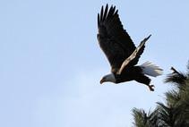 Bald Eagle spotting on Lake CDA. Photo courtesy of Wesley Willand.