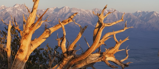 Inyo Mountains Wilderness. Photo by Bob Wick, BLM.