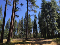 Conifer forest at Lily Gap. Photo by Samantha Storms, BLM.
