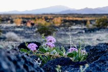 Amboy Crater in MojaveTrails National Monument. Photo by Kyle Sullivan, BLM.