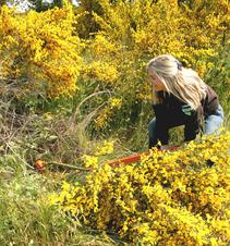 Jennifer Wheeler, a botanist in the field. Photo by BLM.