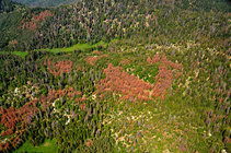Aerial detection survey photo taken near the Sierra National Forest, August 2017. Photo by USFS.