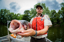 U.S. Fish and Wildlife Service biologist holds a bighead carp. Photo by R. Hagerty, U.S. Fish and Wildlife Service.