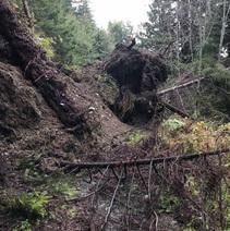 Headwaters Forest Reserve, landslide on Elk River Trail. Photo by Julie Clark, BLM.