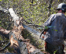 Sawyer clearing vegetation. Photo by Eric Coulter, BLM.