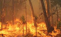 2013 Rim Fire. Photo by USFS.