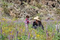 Bradshaw Trail in bloom. Photo by Kyle Sullivan, BLM.