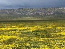 Carrizo Plain NM. Photo by Johna Hurl, BLM.
