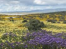 CPNM wildflowers 2019. Photo by Johna Hurl, BLM.