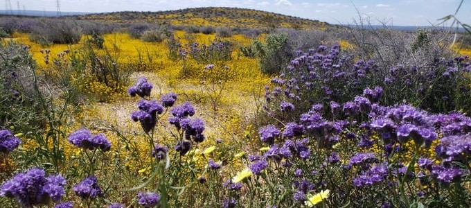 Wildflowers blooming along the highway. Photo by Sterling White, BLM.