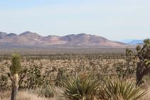 BLM managed public lands in San Bernardino County. Photo courtesy of Castle Mountain Venture.