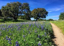 Fort Ord National Monument. Photo by  Laura Nicola, BLM.