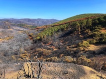 Damage from the Mendocino Complex fire at the South Cow Mountain OHV Management Area. Photo by Ashley Poggio, BLM.