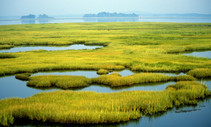 Coastal wetlands. Photo by DOI.