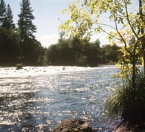 Pit River Campground. Photo by BLM.