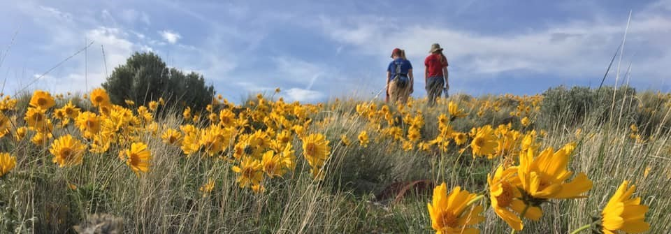 Bald Mountain wildflowers. Photo by Andrew Johnson, BLM.